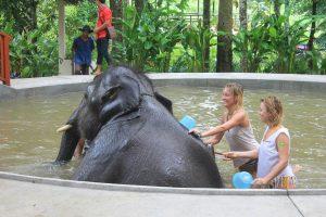 Купание со слоном
